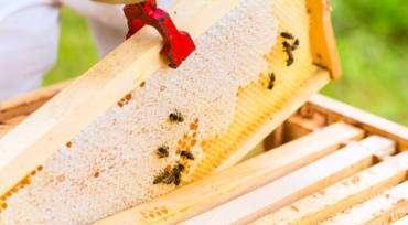 La importancia de las abejas en la vida del  planeta