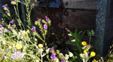 La vida de las abejas en primavera